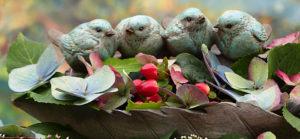 小鳥のお話イメージ